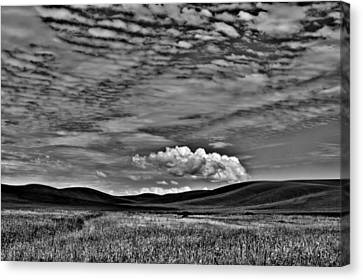 Wheat Fields In The Palouse Canvas Print by David Patterson