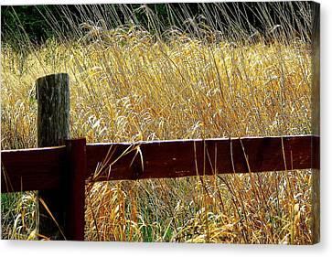 Hornby Island Canvas Print - Wheat N' Fence by Annie  DeMilo