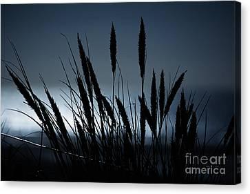 Wheat Stalks On A Dune At Moonlight Canvas Print
