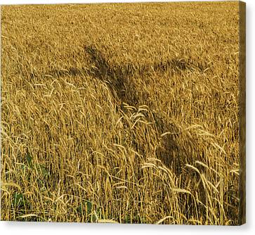 Wheat With Cross  Canvas Print