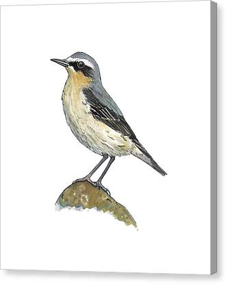 Wheatear, Artwork Canvas Print by Science Photo Library