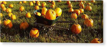 Wheelbarrow In Pumpkin Patch, Half Moon Canvas Print by Panoramic Images