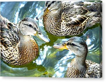 When Duck Bills Meet Canvas Print by Lesa Fine