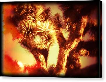 When Heat And Drought Meets A Joshua Tree Canvas Print