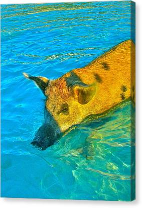 When Pigs Swim Canvas Print by Kim Pippinger