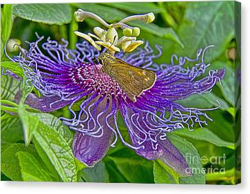 Where Is The Nectar In This Thing Canvas Print by Gary Holmes
