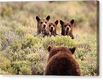 Where Is Your Brother Canvas Print by Aaron Whittemore