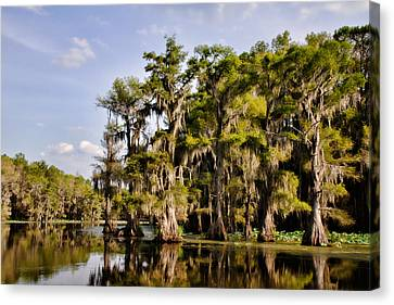 Canvas Print featuring the photograph Where The Cypress Grows by Lana Trussell