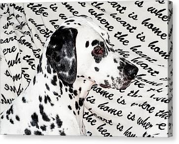 Where The Heart Is Home Where The Heart Is. Kokkie. Dalmation Dog Canvas Print by Jenny Rainbow