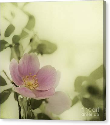 Late Canvas Print - Where The Wild Roses Grow by Priska Wettstein