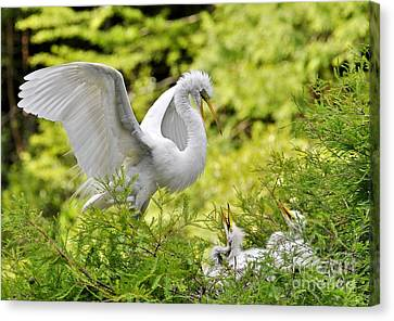 Where's Our Lunch Ma Canvas Print by Kathy Baccari
