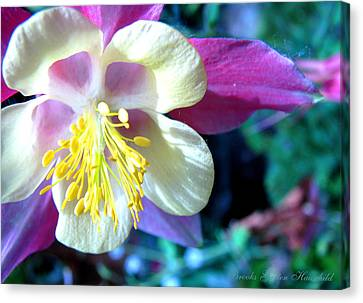Canvas Print featuring the photograph Whimsical Columbine by Brooks Garten Hauschild