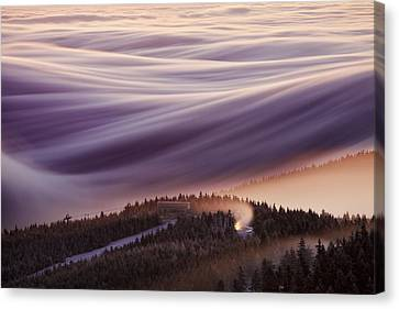 Wind Blown Tree Canvas Print - Whipped Cream by Martin Rak