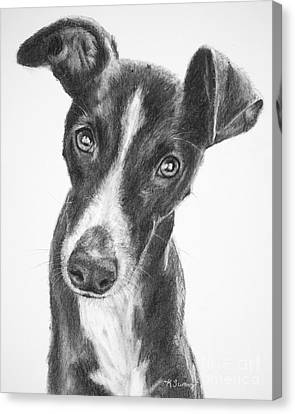 Whippet Black And White Canvas Print by Kate Sumners