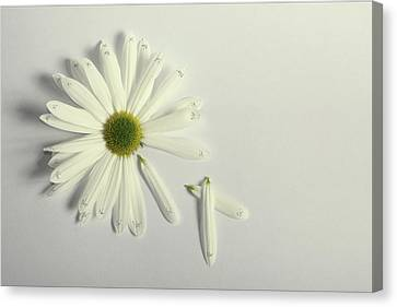 Whishes Canvas Print