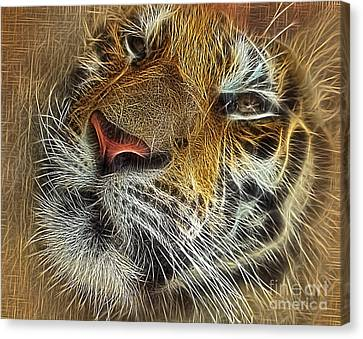 Whiskers Of The Tiger Canvas Print by Kaye Menner