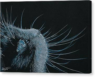 Whiskers Canvas Print by Robyn Green