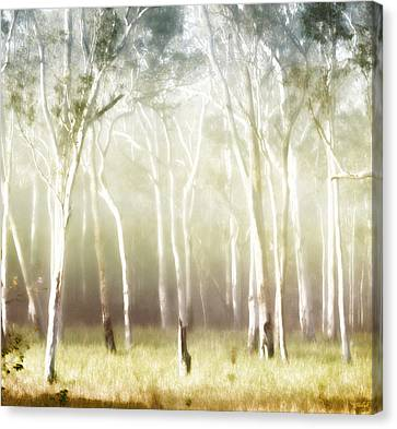 Fog Mist Canvas Print - Whisper The Trees by Holly Kempe