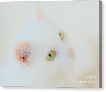 Whisper White Canvas Print by Judy Via-Wolff