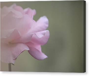 Whispering Beauty Canvas Print by The Art Of Marilyn Ridoutt-Greene