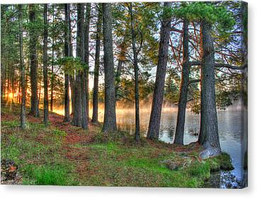 Whispering Pines Canvas Print by Brook Burling