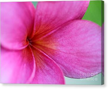 Whispering Pink Plumeria Canvas Print by Sabrina L Ryan