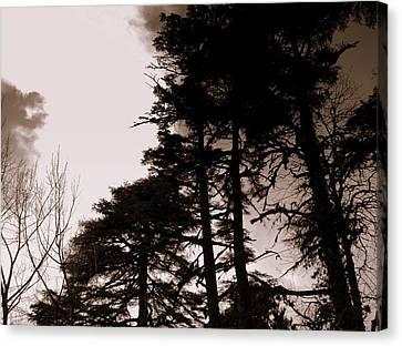 Whispering Trees Canvas Print by Salman Ravish