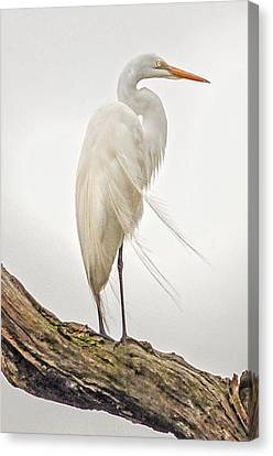 Canvas Print - Whispering Wind by Donnie Smith
