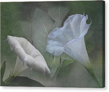 Large White Flower Canvas Print - Whispers Of Angel Trumpet Datura by Angie Vogel