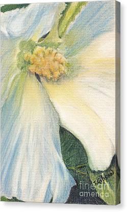 White Althea Canvas Print