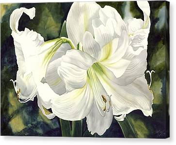 White Amarylilis Canvas Print by Alfred Ng