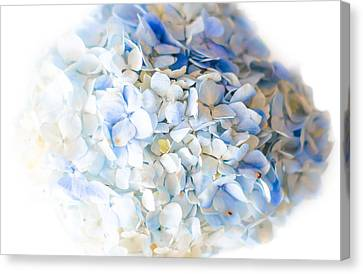 White And Blue Canvas Print by Shelby  Young