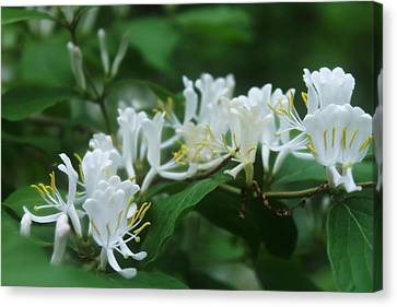 White And Green Canvas Print by Melissa Krauss
