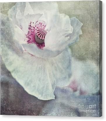 White And Pink Canvas Print by Priska Wettstein