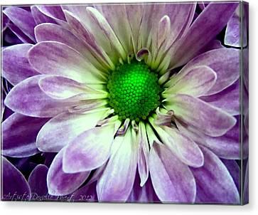 White And Purple Daisy Canvas Print by Danielle  Parent