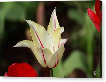 White And Red Flower Canvas Print