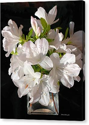 White Azalea Bouquet In Glass Vase Canvas Print by Connie Fox