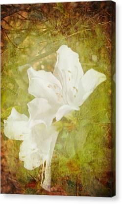 White Azalea Canvas Print by Judy Hall-Folde