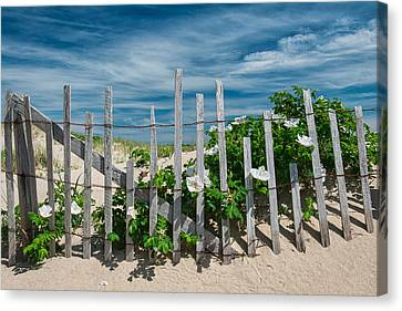 White Beach Roses Canvas Print by Michael Blanchette