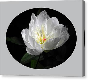 Canvas Print featuring the photograph White Beauty by Yue Wang