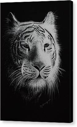 White Bengal Tiger Canvas Print by Joy Bradley