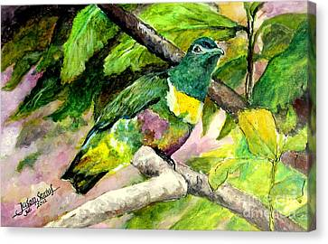 Canvas Print featuring the painting White-bibbed Fruit Dove  by Jason Sentuf