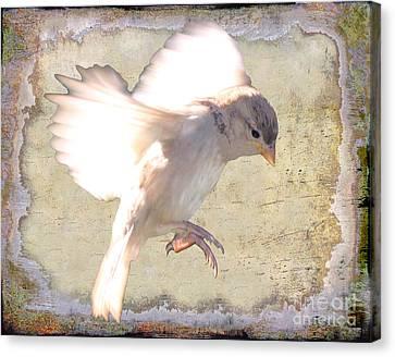 White Bird Canvas Print by Jim Wright