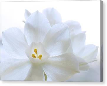 White Blooms Canvas Print by Mariola Szeliga