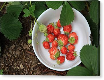 White Bowl With Strawberries Canvas Print