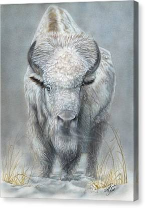 White Buffalo Canvas Print