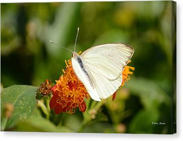 Canvas Print featuring the photograph White Butterfly On Mexican Flame by Debra Martz