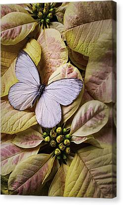 Poinsettias Canvas Print - White Butterfly On Poinsettia by Garry Gay