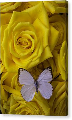 Yellow Butterfly Canvas Print - White Butterfly Resting by Garry Gay