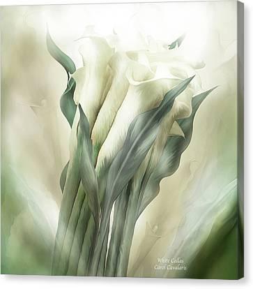 White Callas Canvas Print by Carol Cavalaris